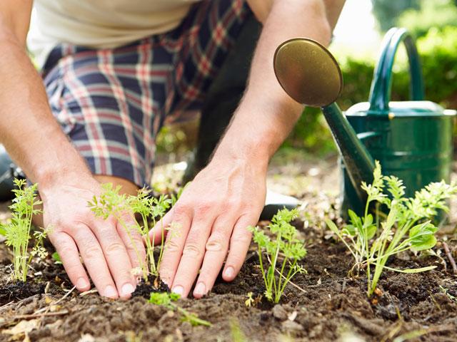 Allotment & Horticulture